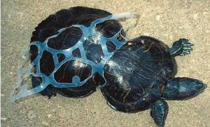 Los animales confunden el plástico con las presas naturales, lo ingieren o se enredan en ellos.