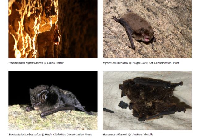 Especies de murciélagos. Fuente: European bat population trends report (EEA)