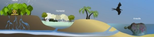 Sistema selva-humedal-arrecife