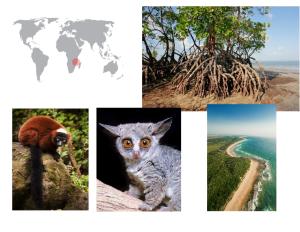 De izquierda a derecha de arriba a abajo: manglar, colobo rojo del río Tana, gálago y costa de Mozambique.
