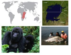 De izquierda a derecha de arriba a abajo: lago Victoria, Gorilla beringei beringei y perca del Nilo.