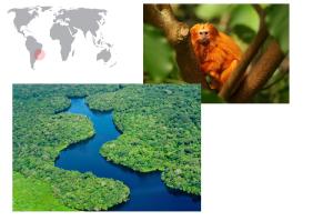 De izquierda a derecha de arriba a abajo: tití leoincito y bosques.