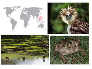 De izquierda a derecha de arriba a abajo: águila filipina, cultivo de arroz y sapo marino.