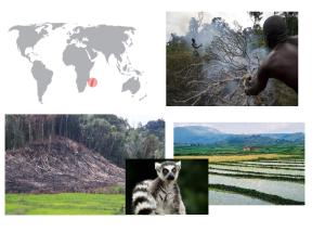 De izquierda a derecha de arriba a abajo: incendio ilegal, deforestación, lemur y cultivos de arroz.