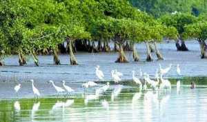 manglares 3