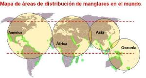 manglares 5