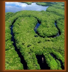 manglares 6