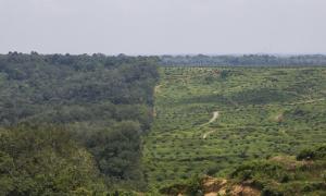 Plantaciones de palma en Sumatra
