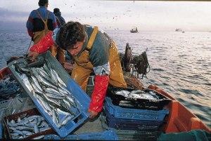 El sector pesquero podría verse afectado por la acidificación de los océanos.