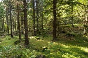Bosque de Picea abies, Noruega