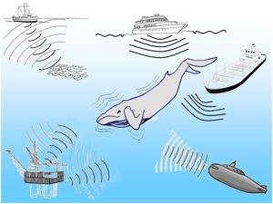 Muchas actividades humanas influyen a las especies marinas