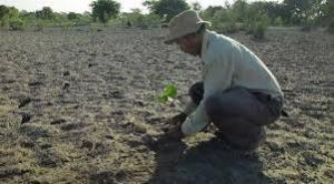 Payeng plantando  árboles.