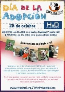 Cartel dia de la adopción Rivanimal