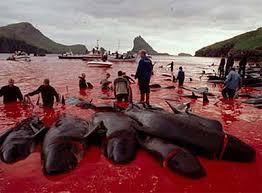 caza de ballenas por parte de Japón