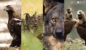 especies en wildmed