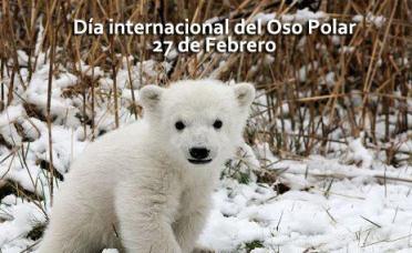dia internaconal del oso polar