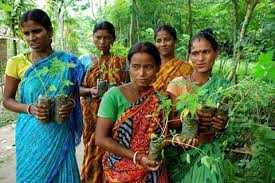 Mujeres de Piplantri