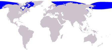 Distribución beluga