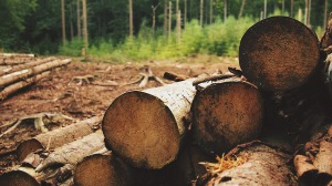 Venta ilegal de madera